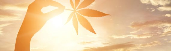 Marijuana Legalization & Insurance